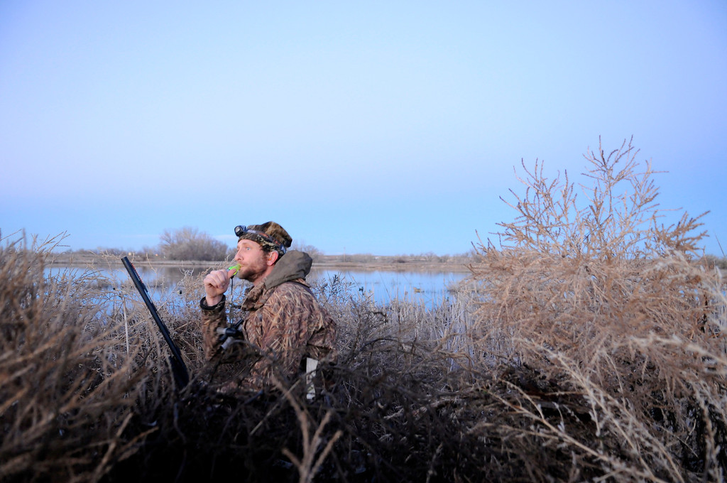 . Tim Brass of Ft. Collins works his duck call at sunrise during a morning duck hunt near Jackson Lake State Park last week. An avid waterfowler, Brass has been watching the mallard migration increase throughout the past month in northeast Colorado.Scott Willoughby, The Denver Post