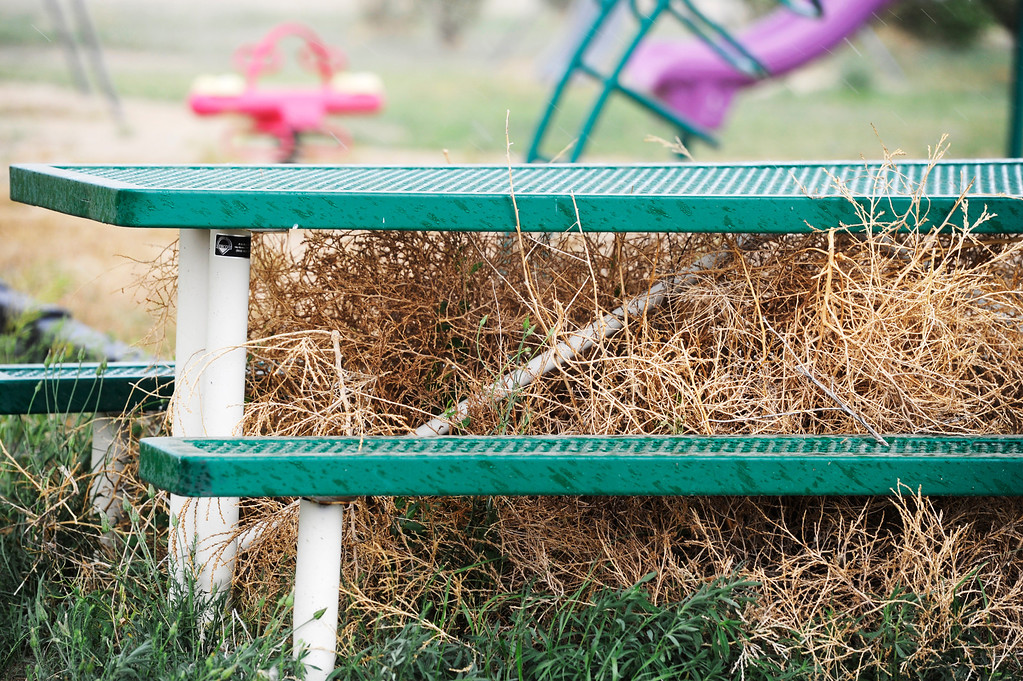 . HASWELL, CO - MAY 29:  Tumbleweeds gather underneath a park bench in the small town of Haswell Colorado Wednesday May 29, 2013. The Intel Corporation, an American multi-national semiconductor computer chip maker, has codenamed their latest and greatest new chip after the small town of Haswell.  (Photo By Andy Cross/The Denver Post)