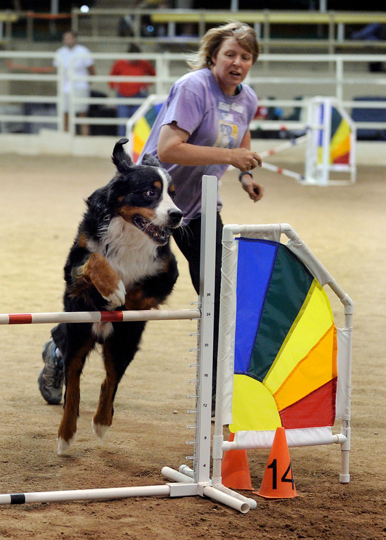. DENVER, CO. - AUGUST 10: Angela Hanson encouraged her dog Sam through an agility course made up of jumps, tunnels, and a series of slalom poles at the Denver County Fair Saturday afternoon, August 10, 2013. Photo By Karl Gehring/The Denver Post