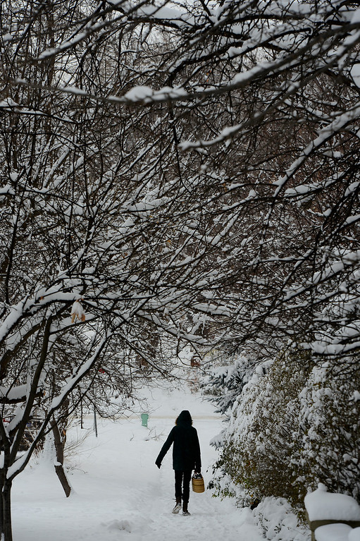 . Cody Meyer walks under snow laden trees along 8th street in Boulder, Co on December 4, 2013.  Cold temperatures and snow gripped the metro area and frigid temperatures are expected to linger through the weekend. (Photo By Helen H. Richardson/ The Denver Post)