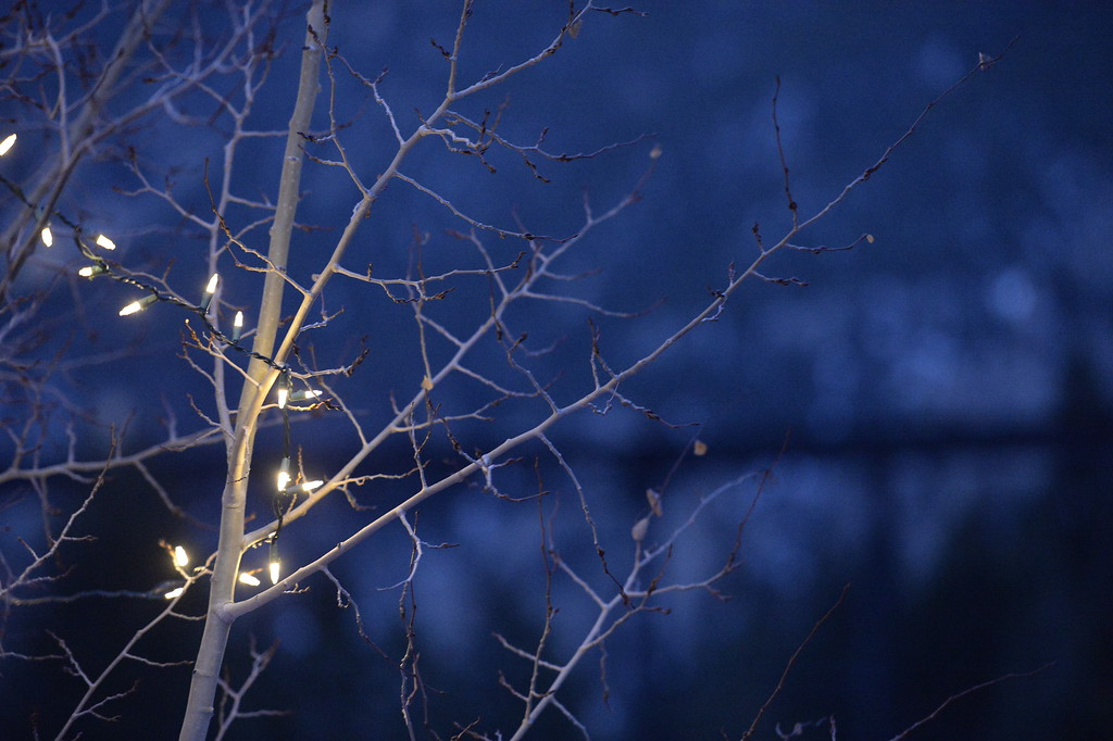 . Holiday light hang from tress in Georgetown, December 19, 2013.  (Photo by RJ Sangosti/The Denver Post)