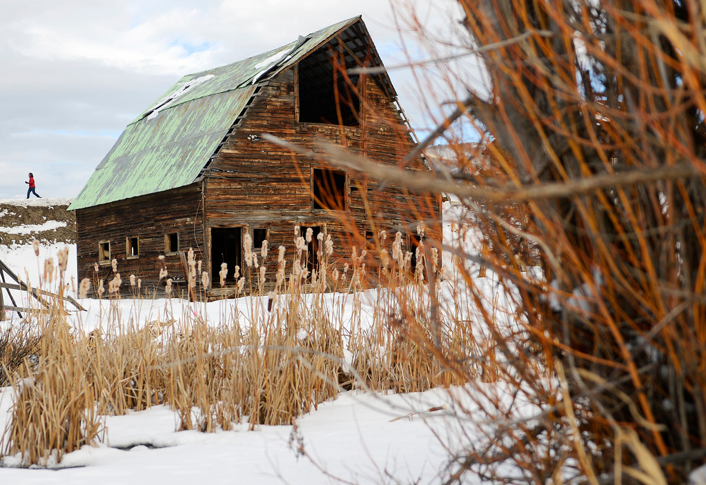 . Lynn McCann, of Steamboat Springs, takes an afternoon walk, December 19, 2013. The iconic barn, that has been featured in the advertising and image of Steamboat Springs and the Steamboat Ski Area for more than 40 years, was originally built in the 1920s.  (Photo by RJ Sangosti/The Denver Post)