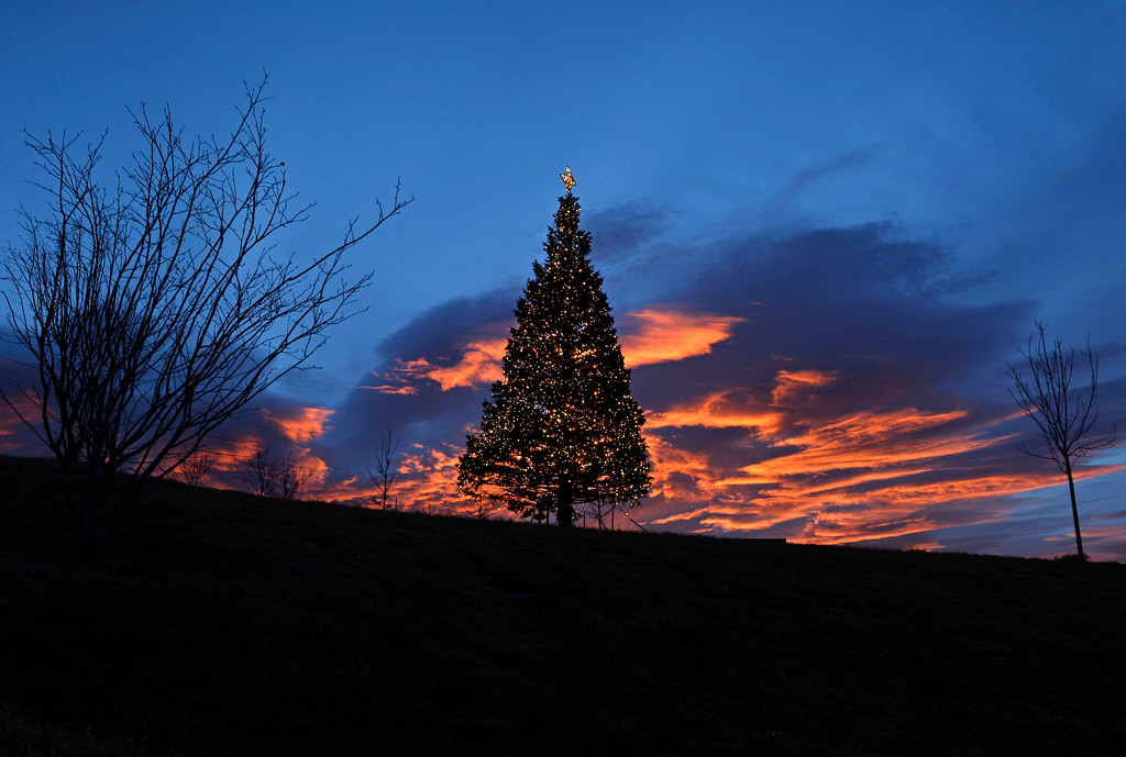 . The sun rises over a Christmas tree in Centennial Center Park, December 18, 2013. Forecast are calling for temperatures in the mid 60s for the area. (Photo by RJ Sangosti/The Denver Post)