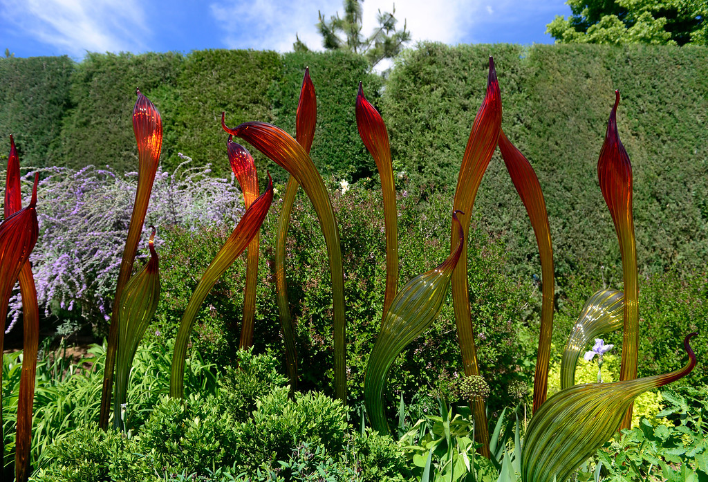 . DENVER, CO - JUNE 3: The Perennial Fiori is on display in the O\'Fallon Perennial Walk. The Denver Botanic Gardens continues preparations for the opening of the outdoor exhibition of artwork by artist Dale Chihuly. Chihuly\'s design and installation team from Seattle, Wash. are on hand this week at the Gardens, installing the glass sculptures ranging in size, form, and color across the 24-acre property. The exhibit officially opens to the public on June 14, 2014 and runs through November 30. (Photo by Kathryn Scott Osler/The Denver Post)