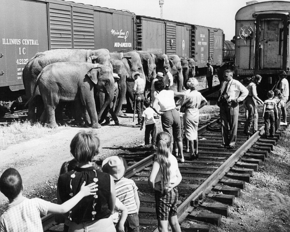 . JUL 23 1961 - Youngsters Watch Circus Elephants After Unloading From Railroad Cars. Seventeen of mammoth animals are being prepared for march through Denver. (Cloyd Teter/The Denver Post)