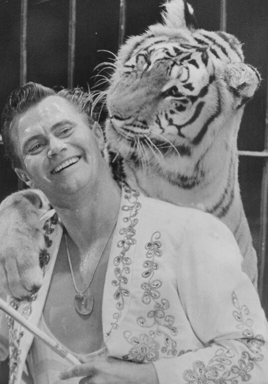 . SEP 4 1964 - Tiger trainer Charley Baumann smiles while one of his cats gazes hungrily at his ear during their act at the Ringling Bros, and Barnum & Bailey Circus at the Denver Coliseum. This tiger grabs Baumann by the arm and licks his face affectionately during the act. His domesticity brings laughter from the audience. But then, none of them volunteered to get in the cage. The circus will perform through Monday night. (George Crouter/The Denver Post)