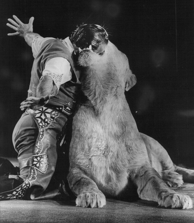 . SEP 21 1972 - Lion tamer Pablo Noel puts his head into a lion\'s mouth three times in his act. Many other types of animal are also shown. (Ernie Leyba/The Denver Post)