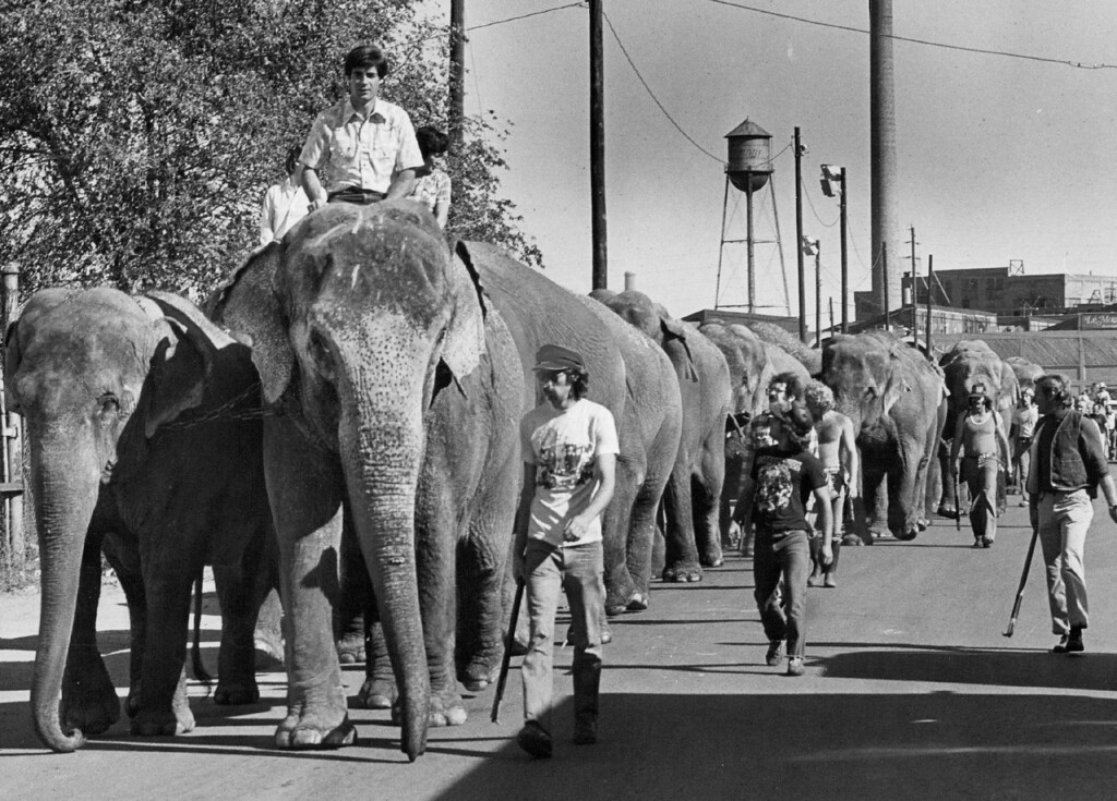 . OCT 1 1980 - The circus has arrived. A herd of 18 elephants, left, led the way Wednesday as the Ringling Brothers and Barnum & Bailey Circus arrived in town for its 101st series of performances here. The animals parad­ed from their train, parked at the Burlington Northern siding in northeast Denver, to the Den­ver Coliseum\'s animal quarters. The circus start­ed Thursday and will be in town until Oct. 12. It was a nice day to be outside anyway, but the procession made it even more pleasant for this group of youngsters, lower left. The parade, which is a free show of sorts in itself, also fea­tured some of the two-legged circus performers, below. There will be 21 performances while the circus is in Denver, and details on times and tickets are available at 892-0800. (Duane Howell/The Denver Post)