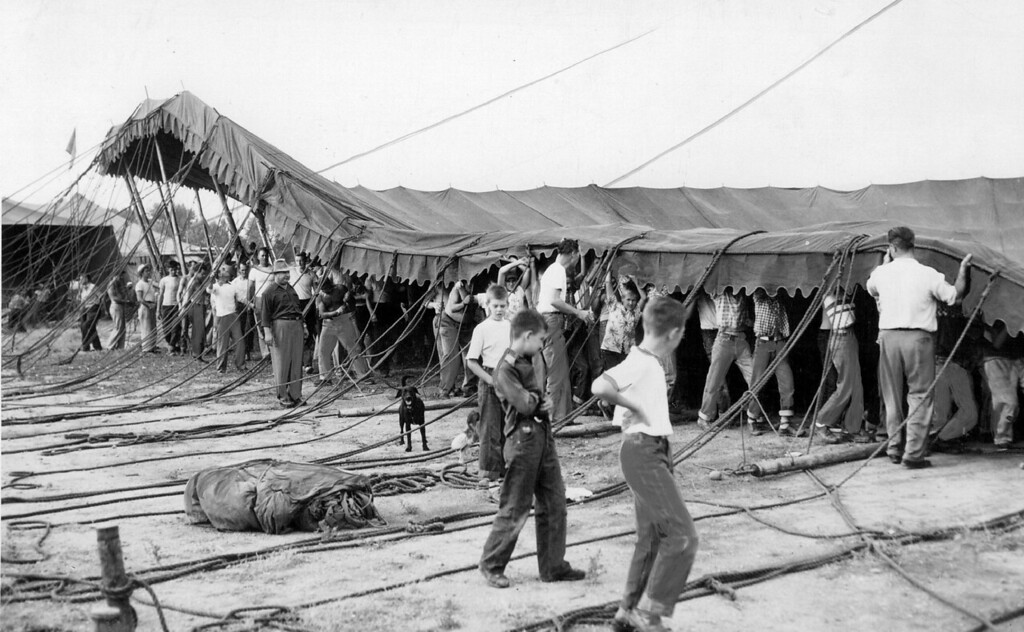 . AUG 6 1951 - The big show- Ringling Brothers Barnum & Bailey circus came back to Denver Monday and the work of setting up the big top was supervised and assisted by scores of youngsters. (Cloyd Teter/The Denver Post)