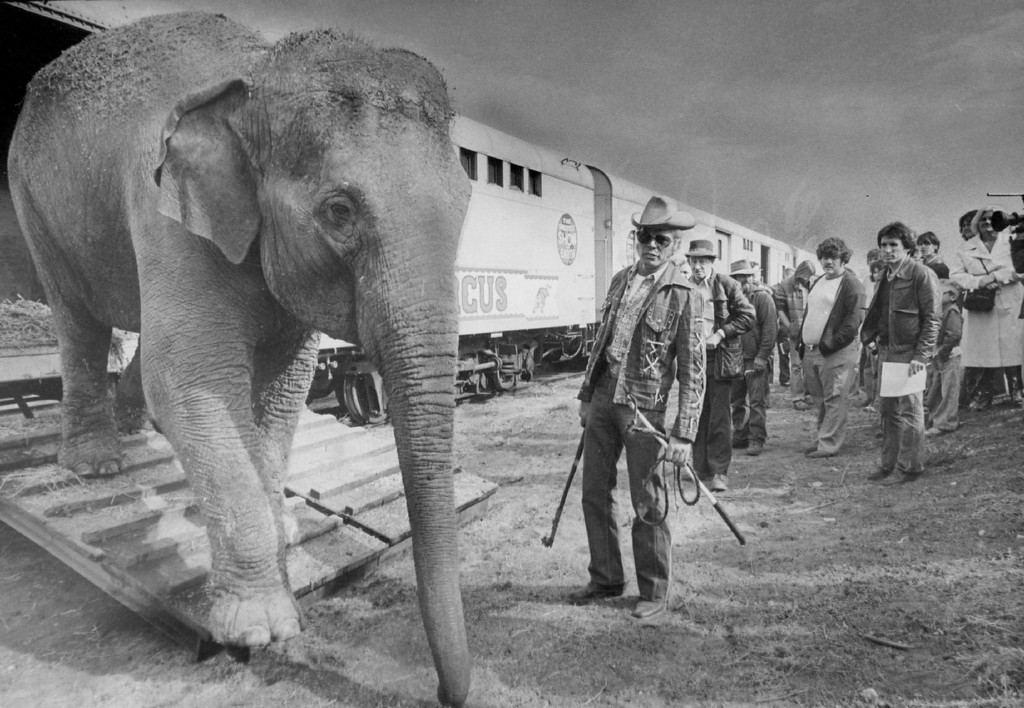 ". SEP 30 1977 - Traditional ""Animal Walk\"" Circus Parade Draws Spectators. A large elephant, a performer in the Ringling Bros, and Barnum & Bailey Circus lumbers out of a boxcar Wednesday to announce the arrival of the circus. The elephant is directed by Ringling\'s famous animal trainer Gunther Gebel-Williams. The one-mile animal parade from the rail yards at Race St. and Race Court to the Coliseum is the traditional start of the circus. The circus opens Thursday for performances through Oct. 16. (Duane Howell/The Denver Post)"
