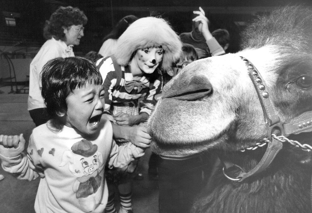 . OCT 8 1988 - Liana Cherne, age 6, reacted with surprise to the friendly advances of Kismet the camel Friday afternoon before on e of the circus performances.  Cherne is a student at Maple Grove Elementary school in Wheatridge. The Clown that was giving her a tour is Laura Pape. Cherne is a hearing-impaired student one of the several Colorado students who got front row seats at the Ringling Bros. Barnum and Baily, greatest show on earth. (Karl Gehring/The Denver Post)