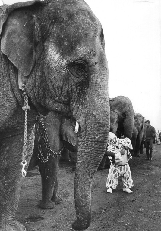 ". SEP 18 1968 - Hey Gang, the circus is in town. Frankie Saluto, a clown with the Ringling Bros. and Barnum & Bailey Circus, visits with his friends the elephants as the ""greatest show on earth\"" tilled into the union Pacific at 44th... (Bill Wunsch/The Denver Post)"