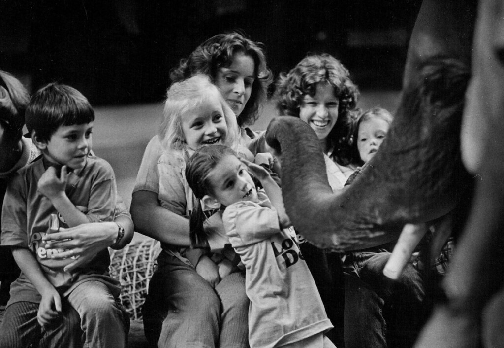 . OCT 10 1978 - Big Treat at the Circus. These children from Fletcher Miller School, 200 Kipling St., react to the nosy meanderings of Charlie the elephant, one of; the animals per­forming in the Ringling Bos. and Barnum & Bailey Circus at the Denver Coliseum this week. These partly deaf youngsters were part of a group of about 150 kids with visual and hearing handicaps who were given a chance to pet the circus animals before the afternoon performance Monday, as special guests of the circus and KHOW Radio The children, who also petted a llama and two ponies, watched the show from a special section of seats on the arena floor. Partly blind children heard descriptions over KHOW and hearing impaired were helped by sign language. (John Sunderland/The Denver Post)