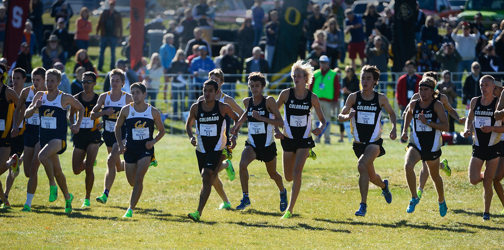 . LOUISVILLE, CO - NOVEMBER 02: The Colorado University men, right,  take off the line against the University of California and many other teams at the Pac 12 Cross Country Championships at the Coal Creek Golf Course Saturday morning, November 02, 2013. CU men won the overall championship Saturday.  (Photo By Andy Cross/The Denver Post)