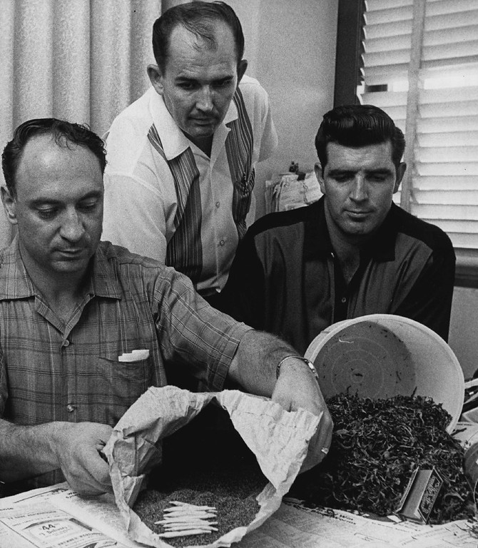 . AUG 1966: Denver Detectives Examine $5,000 Worth of Marijuana Taken in Raid, Aug. 1966. From left are Steve Metros, Mike Dowd and John Gray, who arrested who suspects. (Lowell Georgia/ The Denver Post)