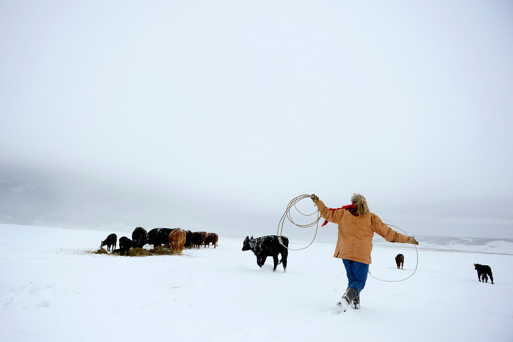 . Kristy Christensen battles snow as she tries to wrangle a sick calf  just off Highway 285 in Jefferson, Colorado on April 17, 2013. (Photo by AAron Ontiveroz/The Denver Post)
