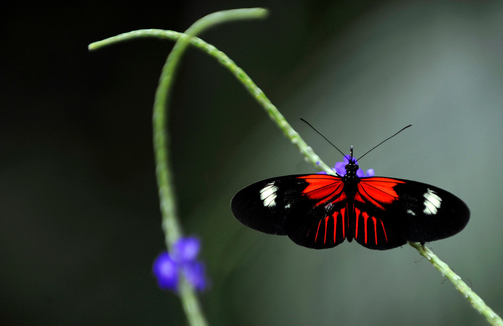 . The Butterfly Pavilion in Broomfield is the nation\'s first insect zoo. (Photo by RJ Sangosti/The Denver Post)