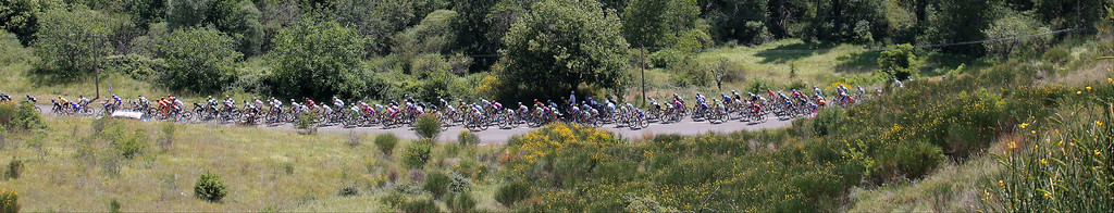. The pack passes lavender fields during the sixteenth stage of the Tour de France cycling race over 168 kilometers (105 miles) with start in in Vaison-la-Romaine and finish in Gap, France, Tuesday July 16, 2013. (AP Photo/Christophe Ena)