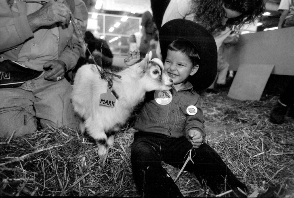 . A Pygmy Goat Named Mark Nuggles Up To Kenneth Adducci At The Petting Zoo. 1993. D. Howell, The Denver Post
