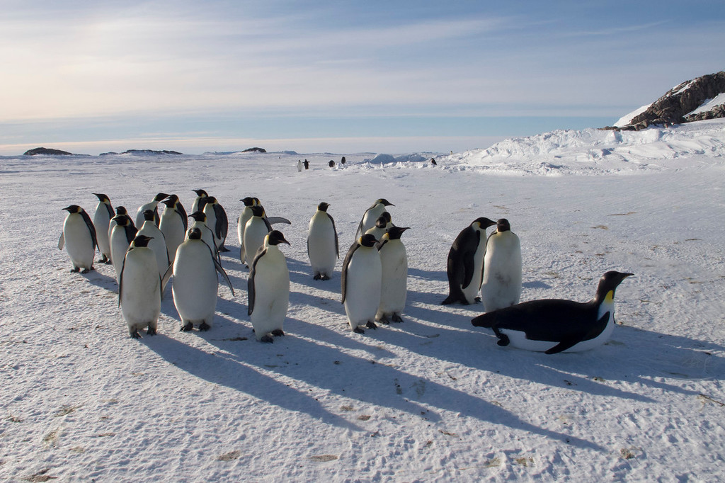 . A Toboggancam with Emperor penguinsused in the filming of, �Penguins: Waddle All the Way,� which premiers Nov. 23 on Discovery. Jane Lynch narrates this two-hour special, a Discovery/BBC co-production from award-winning filmmaker John Downer. (Photo by Frederique Olivier/JDP World All Media)