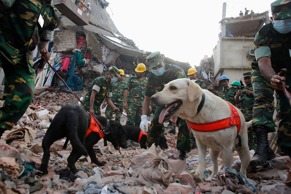 . Members of the Rapid Action Battalion (RAB) attempt to locate survivors with their dog squad, from among the rubble of the collapsed Rana Plaza building in Savar, 30 km (19 miles) outside Dhaka April 30, 2013. REUTERS/Khurshed Rinku