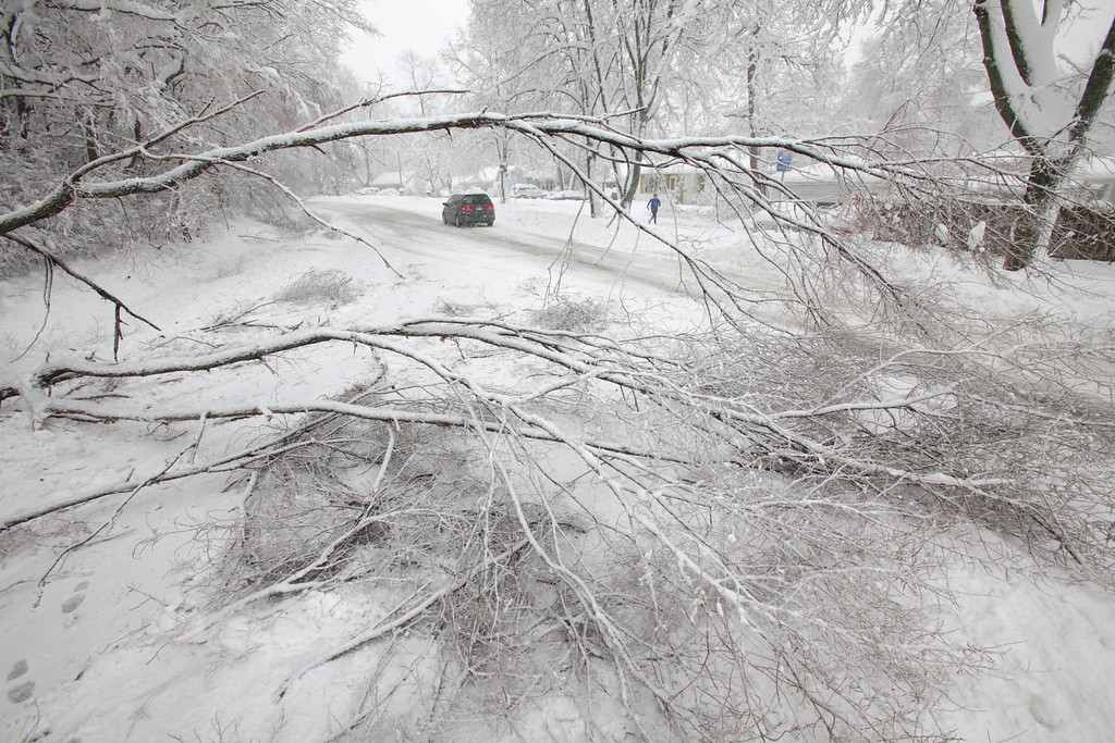 . A downed tree on Old Middleton Road had what little traffic there was down to one eastbound lane in Madison, Wis., Thursday afternoon, Dec. 20, 2012. (AP Photo/Wisconsin State Journal, M.P. King)