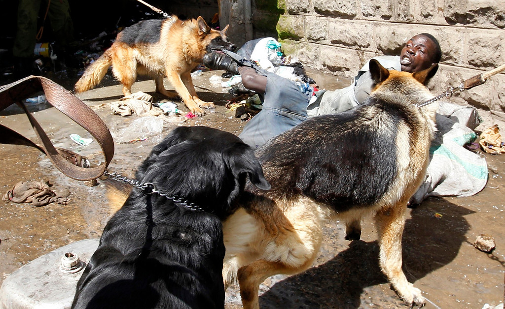 . Police dogs attack a man found stealing from ethnic Somali homes during the second day of skirmishes in the Eastleigh neighbourhood of Kenya\'s capital Nairobi, November 19, 2012. Police fired tear gas to disperse Kenyans who threw stones and broke into the homes and shops of ethnic Somalis in Nairobi\'s Somali-dominated Eastleigh neighbourhood on Monday to protest against a bomb attack in the district on Sunday. REUTERS/Thomas Mukoya