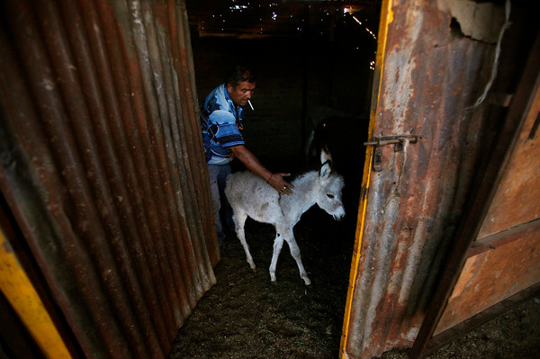 PHOTOS: Donkey Milk in Santiago, Chile