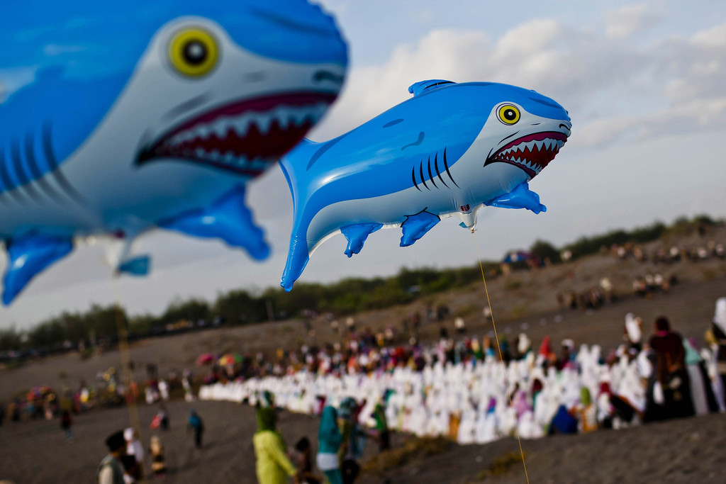 . Shark balloons are seen as Indonesian muslims prepare for Eid Al-Adha prayer at Parangkusumo beach  on October 15, 2013 in Yogyakarta, Indonesia.  (Photo by Ulet Ifansasti/Getty Images)