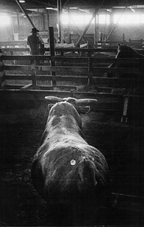 . National Western Stock Show, 1974. Bill Wunsch, The Denver Post
