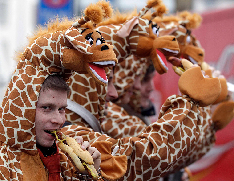 ". Carnival revellers dressed as giraffes eat a sausage while they celebrate the start of the street-carnival with its tradition of fools entering the town halls and women cutting off men\'s ties with scissors on carnival\'s so called ""Old Women\'s Day\"" in Cologne, Germany, Thursday, Feb. 7, 2013. The \""Old Women\'s  Day\""  is traditionally the beginning of  street carnival, the foolish street spectacles in the carnival centers of Duesseldorf, Mainz and Cologne.  (AP Photo/Frank Augstein)"