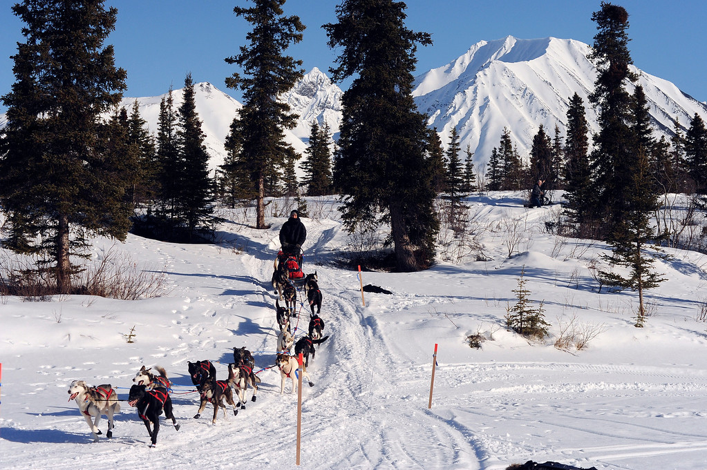 . In this March 3, 2014 photo, Robert Bundtzen drives his team onto Puntilla Lake in Alaska as he arrives at the Rainy Pass checkpoint during the 2014 Iditarod Trail Sled Dog Race. (AP Photo/The Anchorage Daily News, Bob Hallinen)