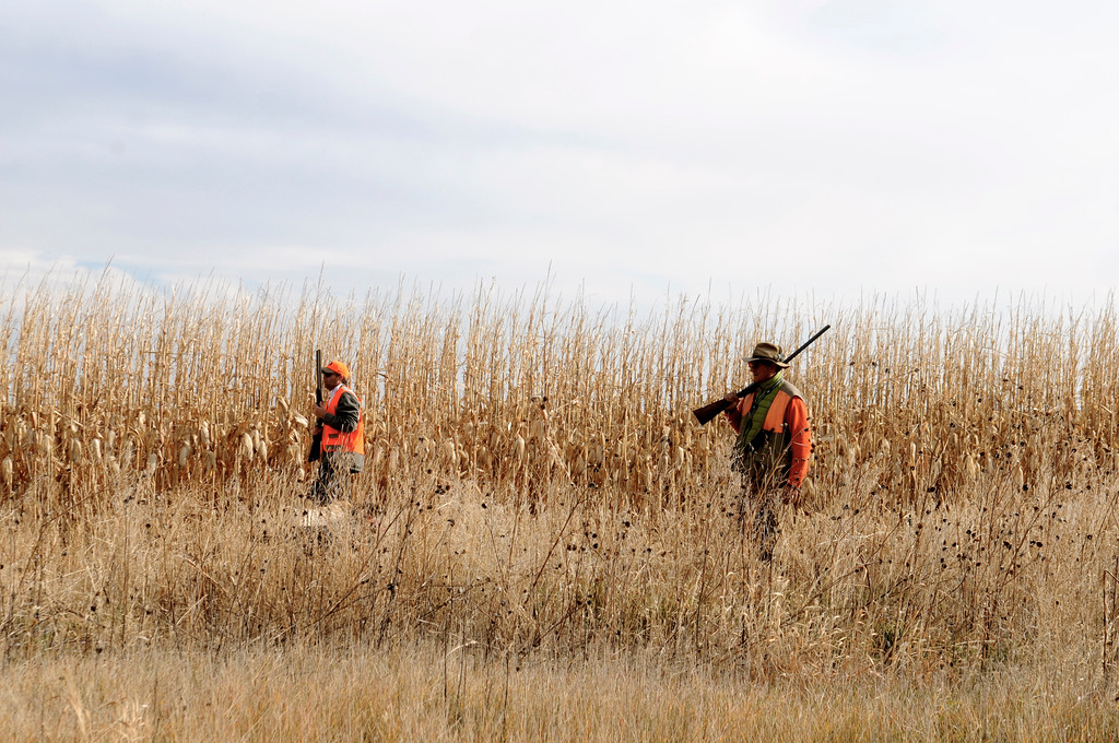 . Jim O\'Neal, left, and Javier Gonzalez-Bringas walk the last few remaining rows of standing corn on O\'Neal\'s family farm in search of pheasants over the 2013 opening weekend. The corn was harvested shortly after the pheasants. Scott Willoughby, The Denver Post