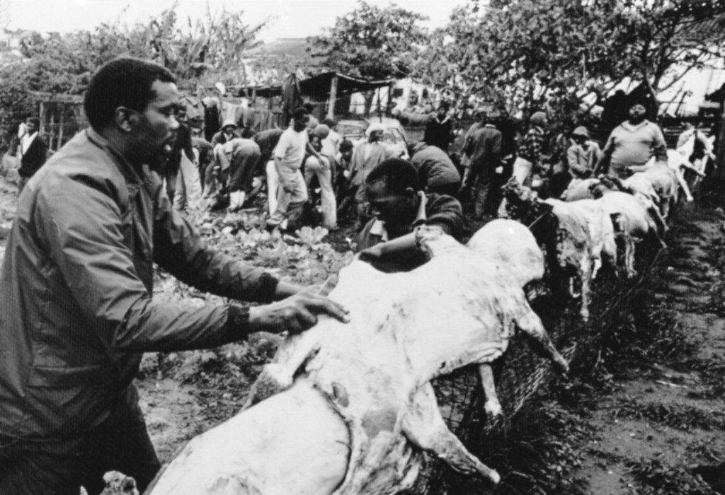 . Neighbors of South African Black Consciousness movement leader Steve Biko, who died while in police custody, slaughter sheep in a cabbage patch in Biko\'s back yard, Sept. 25, 1977, in preparation for his funeral in King Williams Town.  (AP Photo/Matt Franjola)
