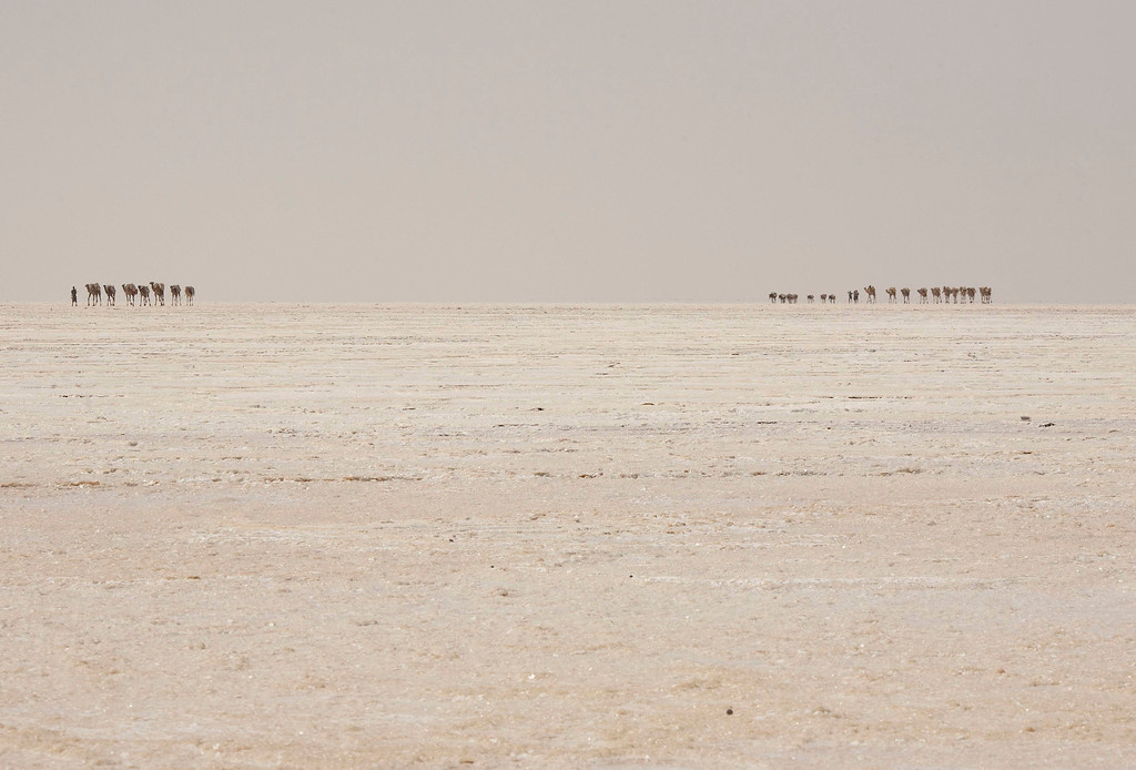 . A camel caravan carrying slabs of salt travels away from the Danakil Depression, northern Ethiopia April 22, 2013. The Danakil Depression in Ethiopia is one of the hottest and harshest environments on earth, with an average annual temperature of 94 degrees Fahrenheit (34.4 Celsius). For centuries, merchants have travelled there with caravans of camels to collect salt from the surface of the vast desert basin. The mineral is extracted and shaped into slabs, then loaded onto the animals before being transported back across the desert so that it can be sold around the country. Picture taken April 22, 2013. REUTERS/Siegfried Modola