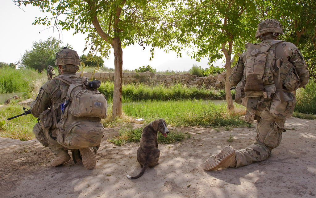 . A puppy sits between U.S. Army soldiers of 5-20 Infantry Regiment attached to 82nd Airborne Division, as they secure an area during a patrol in Zharay district of Kandahar province, southern Afghanistan June 12, 2012.  REUTERS/Shamil Zhumatov
