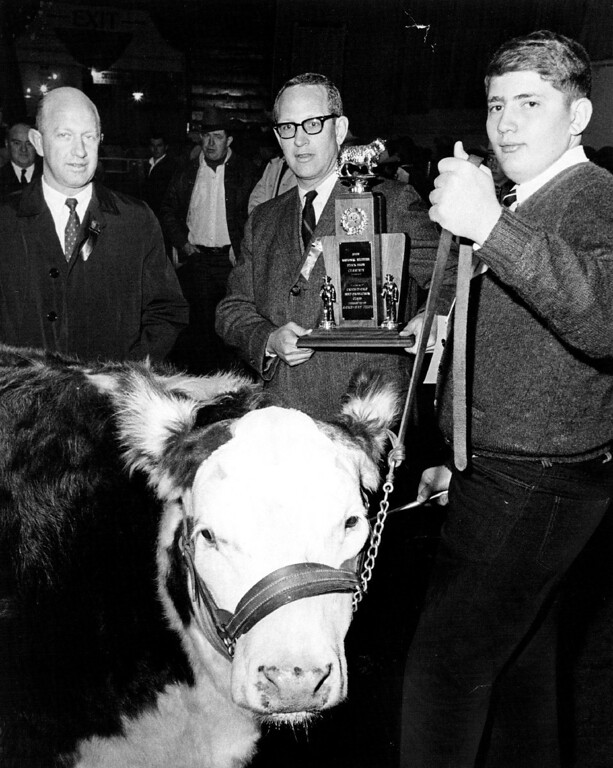 """. Stock Show. At left is J. Rodney Uhrich, vice president of the calf\'s sponsoring group, First National Bank of Denver. David Arndt. 15, of Weldona, Colo., shows \""""Cash,\"""" which won him the Catch-It Steer Contest  at the National Western. 1968. Bill Peters, The Denver Post  Credit: Denver Post"""