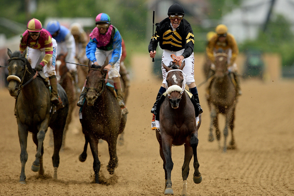 . BALTIMORE, MD - MAY 18:  Oxbow #6, ridden by Gary Stevens, leads the field to the finish line to win the 138th running of the Preakness Stakes at Pimlico Race Course on May 18, 2013 in Baltimore, Maryland.  (Photo by Patrick Smith/Getty Images)