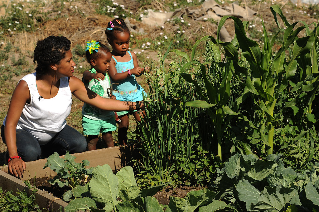 """. DENVER, CO - JULY 3:  Neambe Leadon Vita,left, and her two young children Selasia, 3, in blue, at far right, and Libya, 21 months, in green,  tend to their gardens at 33rd and Elm street in Denver, CO. on July 3, 2013.  Neambe and her husband Ietef Vita, not shown, try to grow as much food as possible as part of their vegan and healthy diet.   As part of our \""""Summer of Love\"""" series for the Style section we profile the relationship of DJ Cavem Moetavation (a.k.a. Ietef Vita) and his wife Neambe Vita.  They are proud and longtime Five Points residents. They\'re artists, community activists, musicians, teachers and more.  They espouse the idea of being vegan or vegetarian and promote eating healthfully and organically.  (Photo by Helen H. Richardson/The Denver Post)"""