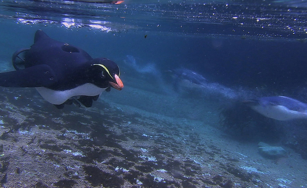 . An underwater camera used during the filming of �Penguins: Waddle All the Way,� which premiers Nov. 23 on Discovery. Jane Lynch narrates this two-hour special, a Discovery/BBC co-production from award-winning filmmaker John Downer. (Photo by Philip Dalton/JDP World All Media)