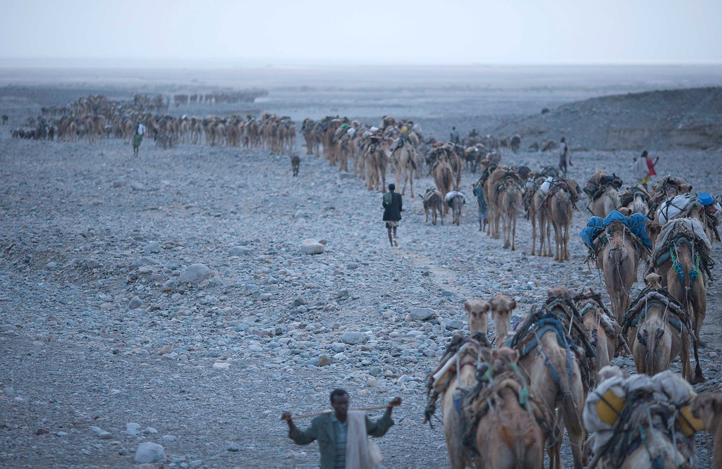 . At dawn, a camel caravan starts its journey to the Danakil Depression in northern Ethiopia April 22, 2013. The Danakil Depression in Ethiopia is one of the hottest and harshest environments on earth, with an average annual temperature of 94 degrees Fahrenheit (34.4 Celsius). For centuries, merchants have travelled there with caravans of camels to collect salt from the surface of the vast desert basin. The mineral is extracted and shaped into slabs, then loaded onto the animals before being transported back across the desert so that it can be sold around the country. Picture taken April 22, 2013. REUTERS/Siegfried Modola