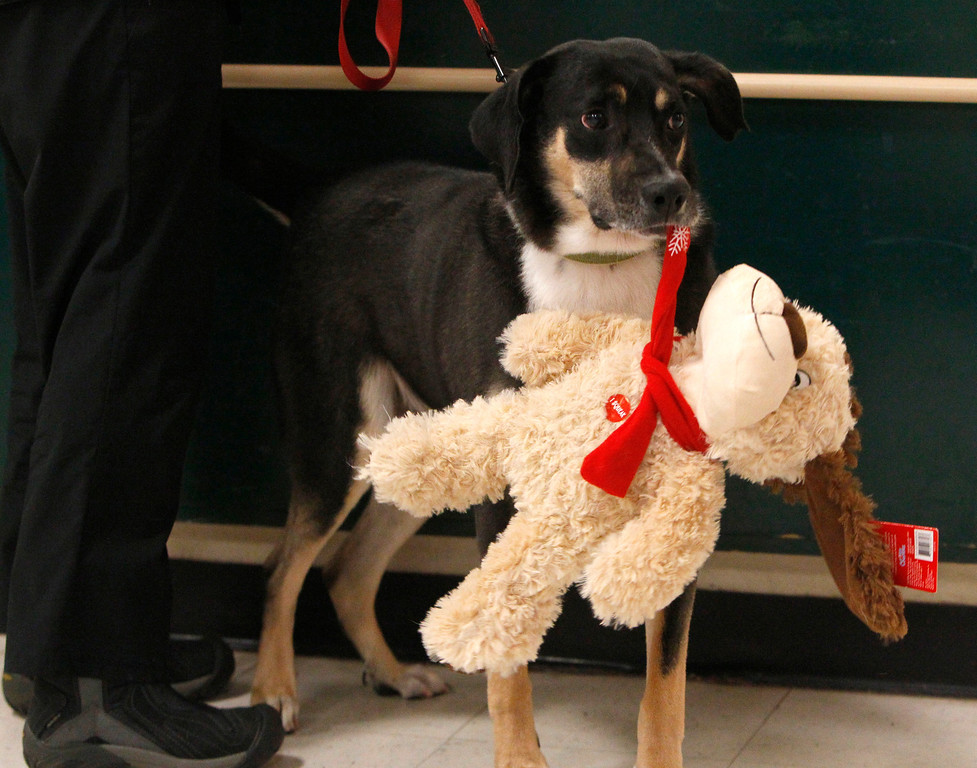 . Comet carries Chance, a Luv-A-Pet plush toy, at a Dallas PetSmart during Black Friday Nov. 29, 2013. For every Luv-A-Pet purchased, 10 percent of proceeds are donated to PetSmart Charities. (Richard W. Rodriguez/ AP Images for PetSmart)