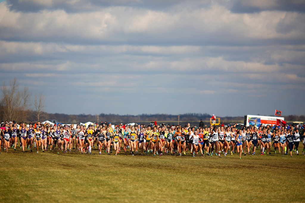 . TERRE HAUTE, IN - NOVEMBER 23: The women\'s race begins at the NCAA Cross Country Championships at Lavern Gibson Championship Cross Country Course on Saturday, November 23, 2013, in Terre Haute, Indiana. (Photo by Aaron P. Bernstein/Special to The Denver Post)