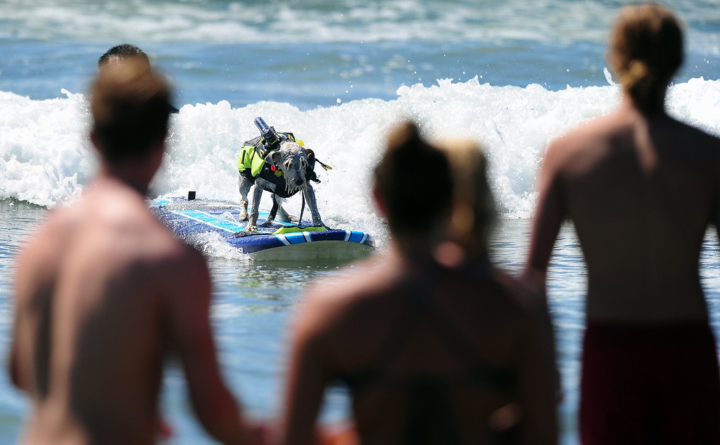 . People gather to watch dogs catch a wave during the 5th Annual Surf Dog competition at Huntington Beach, California, on September 29, 2013.  AFP PHOTO/Frederic J. BROWN/AFP/Getty Images