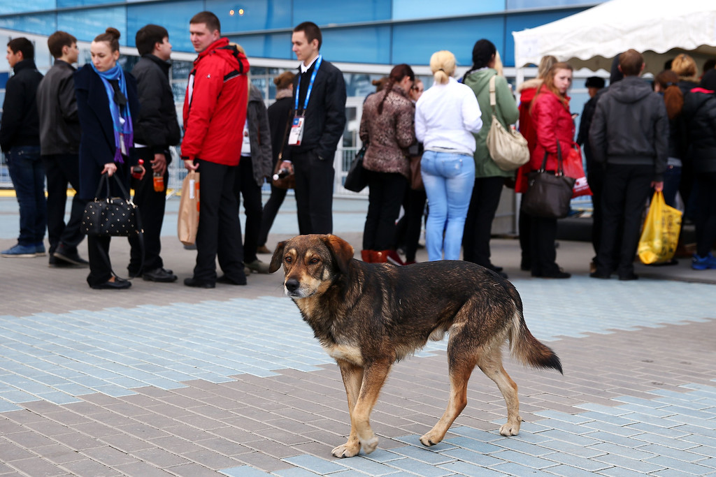 . A stray dog walks through Olympic Park ahead of the Sochi 2014 Winter Olympics on February 5, 2014 in Sochi, Russia.  (Photo by Paul Gilham/Getty Images)