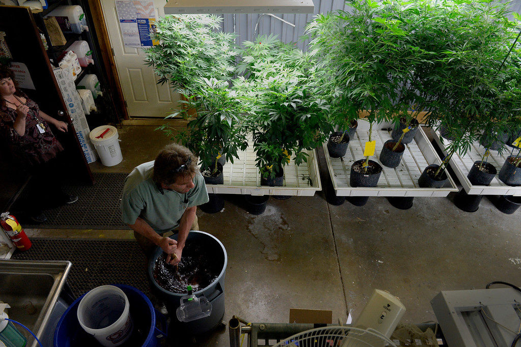 . NORTHGLENN, CO. - DECEMBER 31: Grower Steve Jenkins mixes nutrients while feeding marijuana plants at BotanaCare 21+ in Northglenn, CO December 31, 2013. The retail marijuana center was preparing to open at 9am on January 1, 2014 when Colorado becomes the first place anywhere in the world to allow legal marijuana sales to anybody over 21 for any purpose. (Photo By Craig F. Walker / The Denver Post)