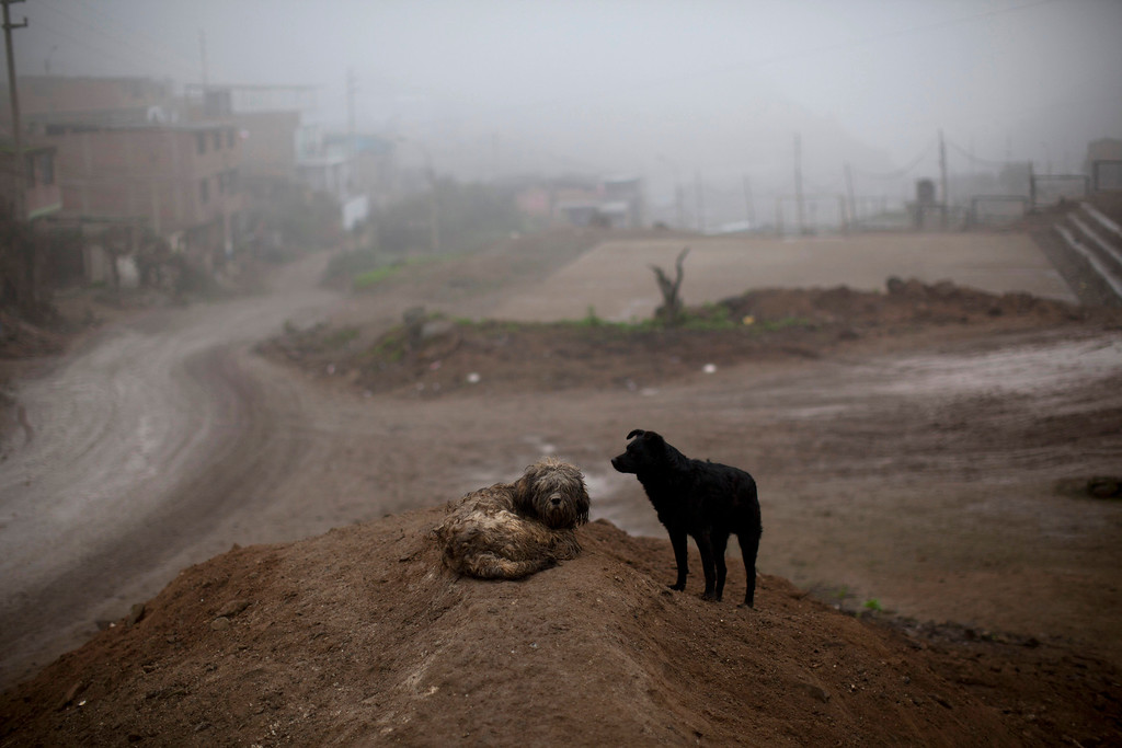 ". In this Aug. 13, 2013 photo, stray dogs are seen in the Virgen de las Mercedes neighborhood of Lima, Peru. For roughly four months a year, the sun abandons Peru\'s seaside desert capital, suffocating it under a ponderous gray cloudbank and fog that coats the city with nighttime drizzles. The cold Humboldt current that runs north from Antarctica along the coast is the culprit, colliding with the warmer tropical atmosphere to create the blinding mists called ""garua\"" in coastal Chile and Peru. (AP Photo/Rodrigo Abd)"