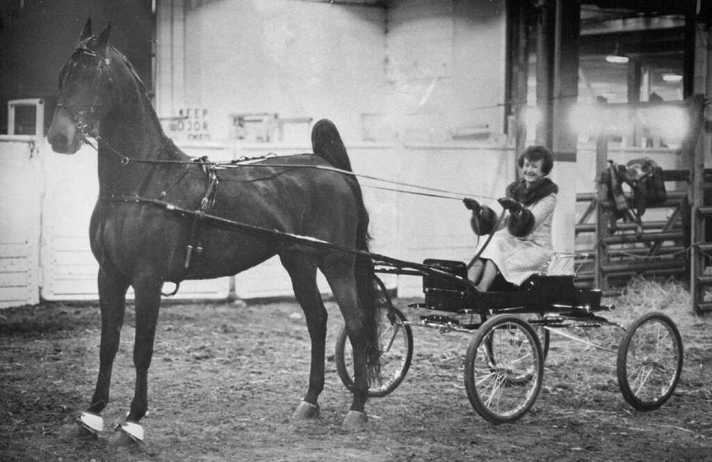 . Mrs. Betty Gardner Drives A Rig Pulled By Her Horse, Gloriann. Appearing for the first time in competition, Gloriann took first place. 1974. John Prieto, The Denver Post