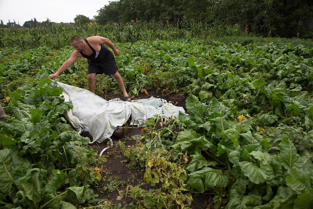 . A man covers a body with a  plastic sheet near the site of a crashed Malaysia Airlines passenger plane near the village of Rozsypne, Ukraine, eastern Ukraine Friday, July 18, 2014. Rescue workers, policemen and even off-duty coal miners were combing a sprawling area in eastern Ukraine near the Russian border where the Malaysian plane ended up in burning pieces Thursday, killing all 298 aboard. (AP Photo/Dmitry Lovetsky)