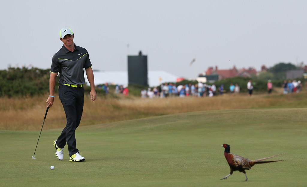 . Rory McIlroy of Northern Ireland pauses play and watches a pheasant crossing the 8th green during the second day of the British Open Golf championship at the Royal Liverpool golf club, Hoylake, England, Friday July 18, 2014. (AP Photo/Scott Heppell)